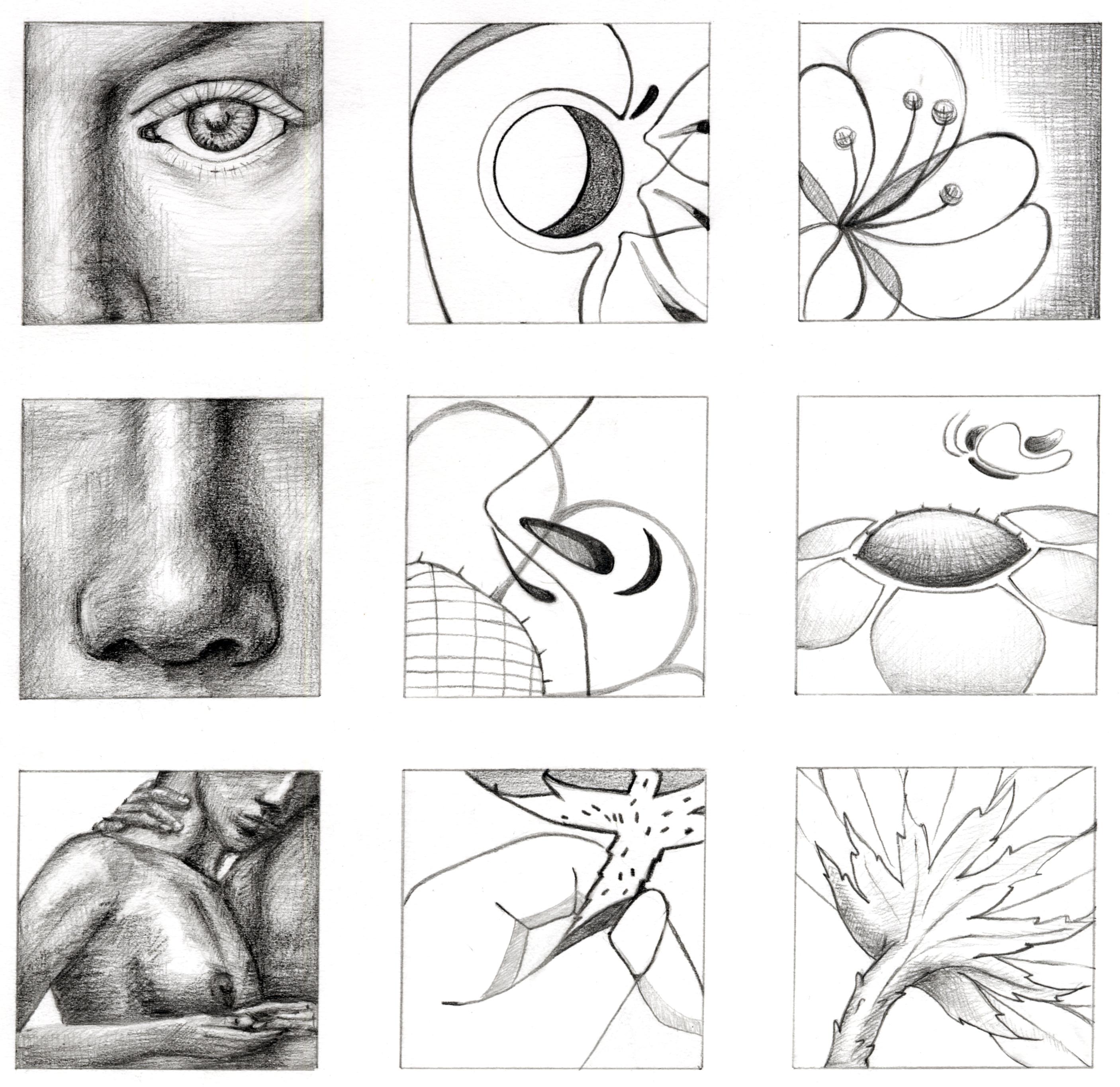 basic 2D design studio